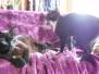 Cat Sitting Spring 2013