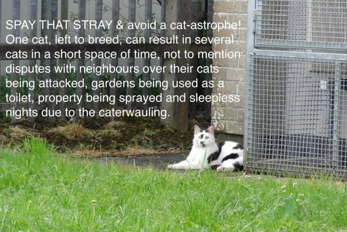 FCI Avoid a Cat-astrophe
