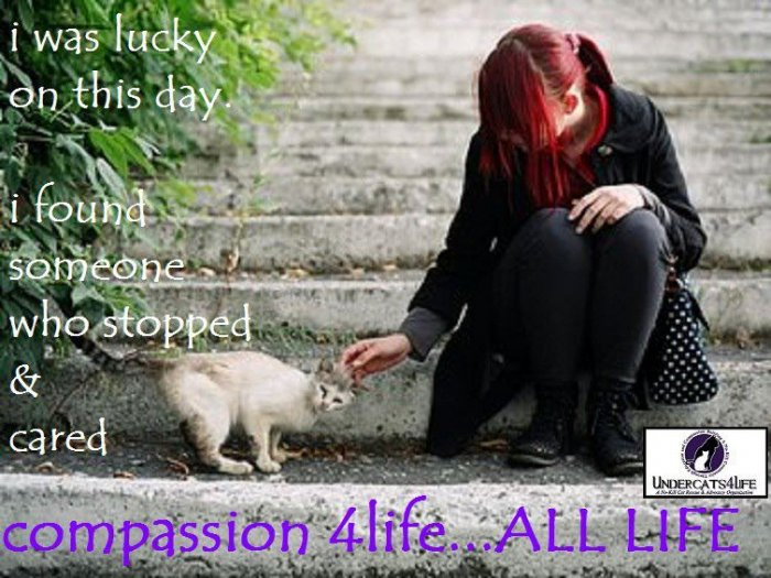 FCI Compassion for Life