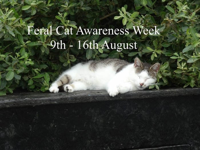 FCI Feral Cat Awareness Week 2014