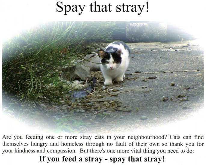 FCI Spay that Stray