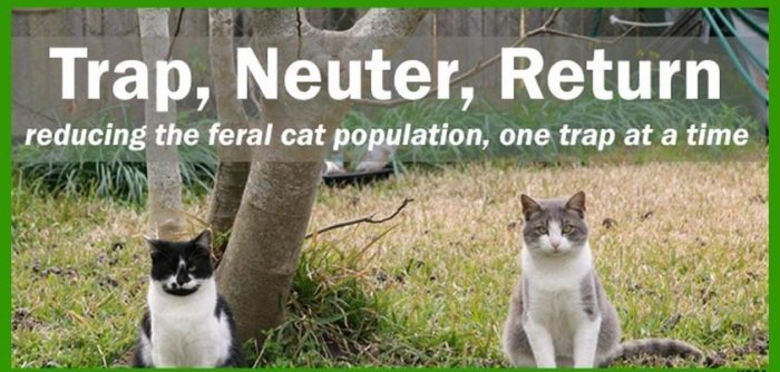 FCI Trap Neuter Return
