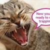 Now you're ready to start trapping!