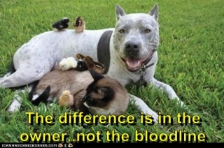 The difference is in the owner, not the bloodline