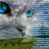 God asked the feline spirit by catzrme