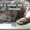 A Cat is Forever Not Just For Christmas