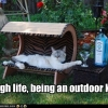 A Rough Life Being an Outdoor Kitteh