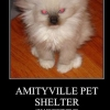 Amityville Pet Shelter