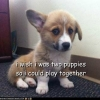 I wish I was two puppies