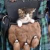 Little Known Scottish Kittens of War