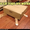 The cat traps are working