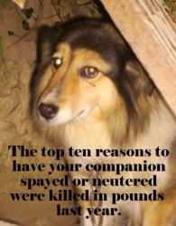 Top Ten Reasons to Neuter