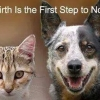No-birth is the first step to No-kill