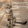 Save 100 Homeless Cats