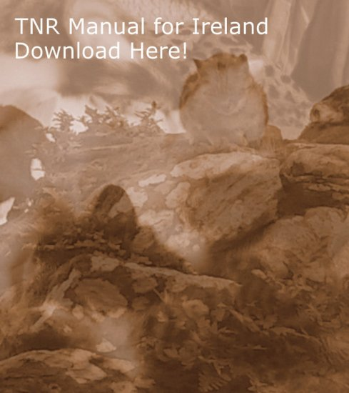 Download the TNR Manual for Ireland Here!