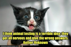 Animal testing is a terrible idea