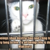 All beings shun destruction