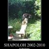 Shapoloh