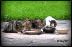 LFC Three Feral Kittens