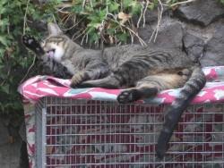 Trap Savvy Cat