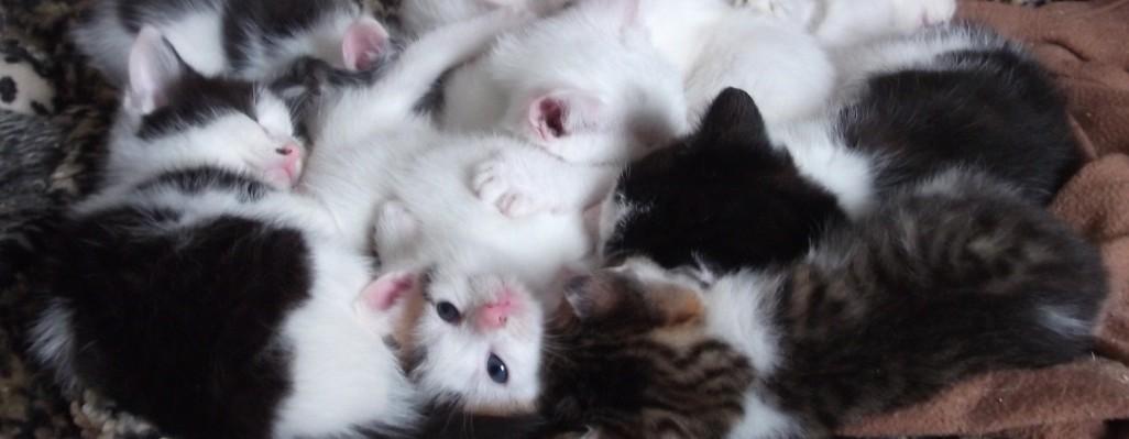 Kitten Bundle