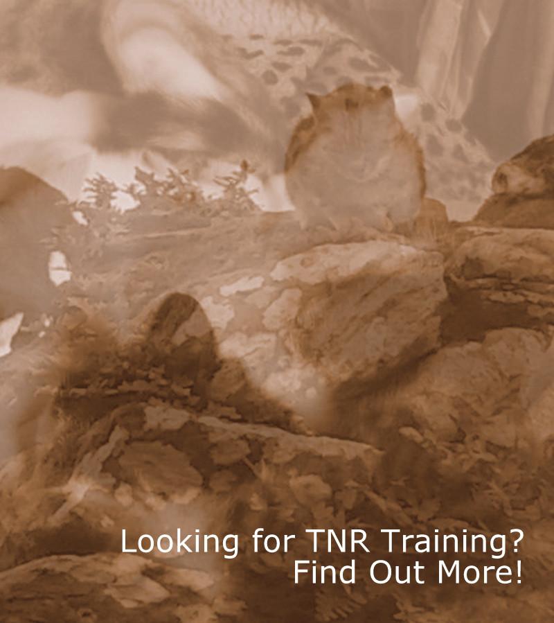 TNR Training